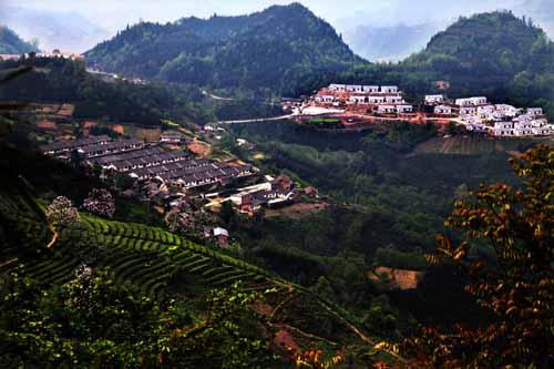 马边以林,茶,畜三大农业主导产业为突破口,积极调整产业结构,大力